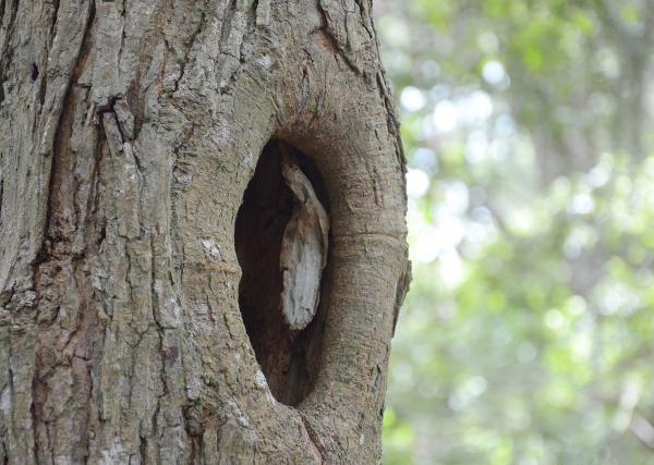 new08262013 tree 4